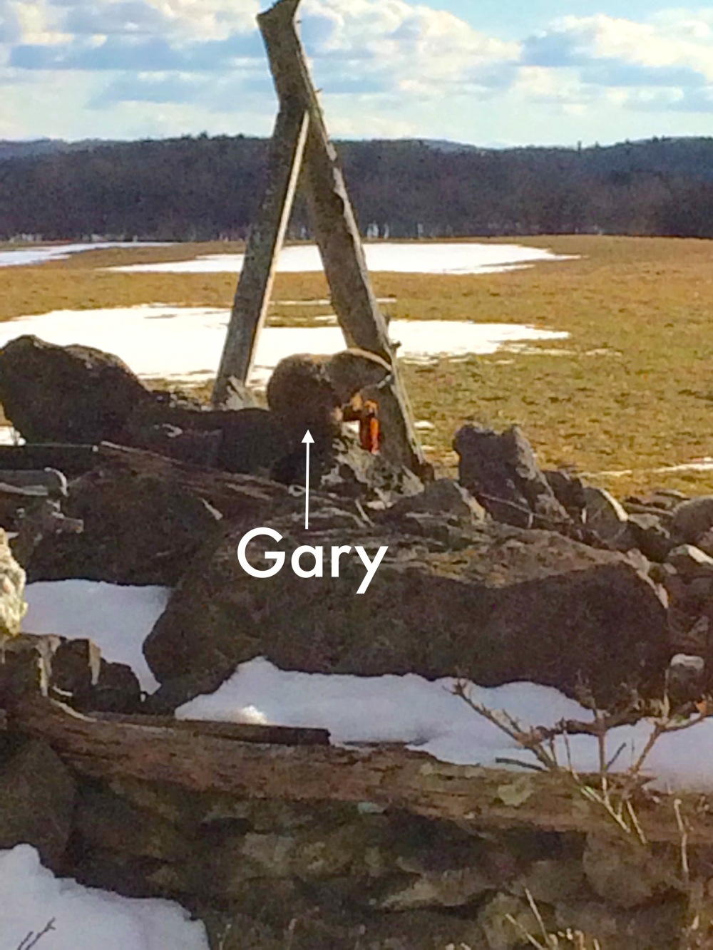 Gary the beaver.jpg